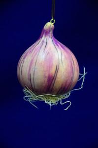 Garlic Gourd Ornament