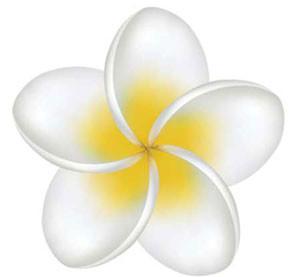 Yellow Plumeria - Decal