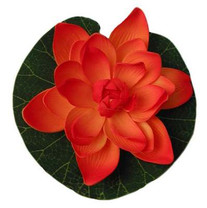 Tetra Pond Silk Lily Assortment
