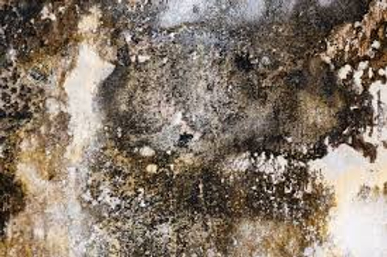 The Invisible Dangers of Mold