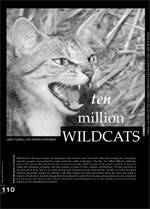 Ten Million Wildcats