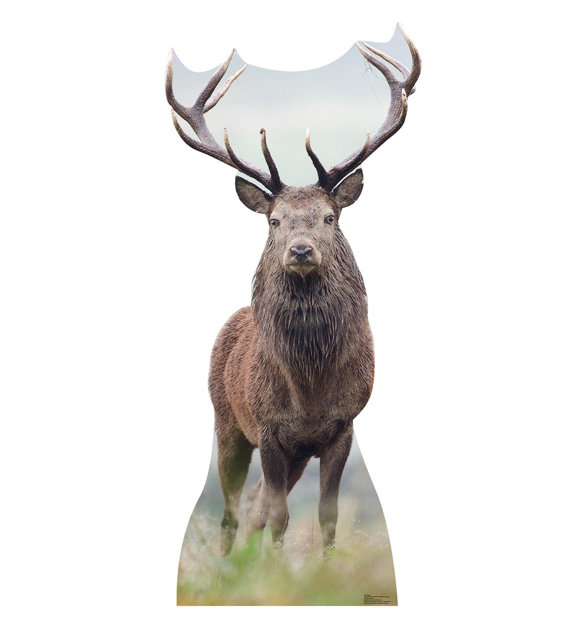 lifesize elk cardboard standup