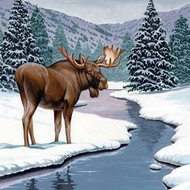 Moose Facts, Information, and Photos