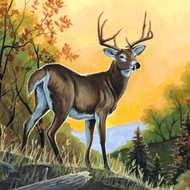Whitetail Deer Facts, Information, and Photos