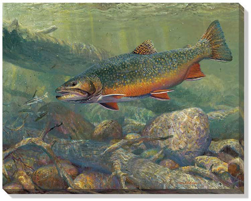 Cool Waters Brook Trout Wrapped Canvas Art