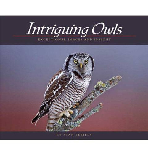 Book- Intriguing Owls