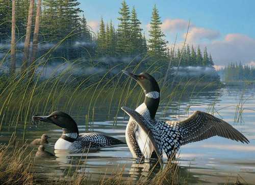 Common Loon 1000 Piece Puzzle
