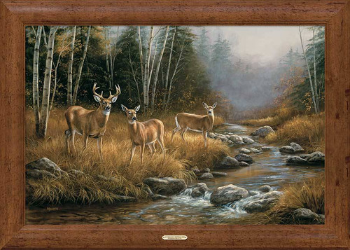 Streamside Deer - Framed Print