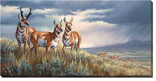 Pronghorn Storm Wrapped Canvas Art