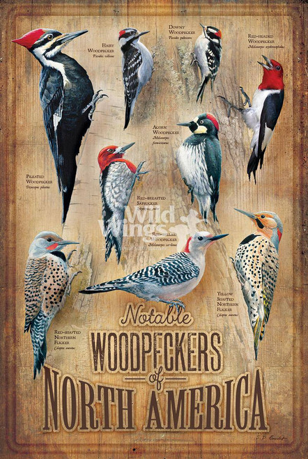 Woodpeckers of North America Wooden Sign