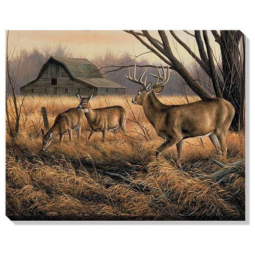 Quot Abandoned Homestead Quot Whitetail Deer Canvas Art