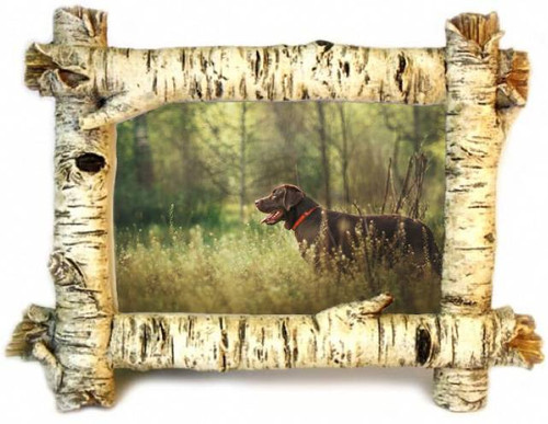 Birch 4x6 Photo Frame