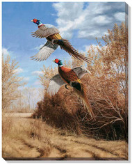 Island Treasures- Pheasant Wrapped Canvas