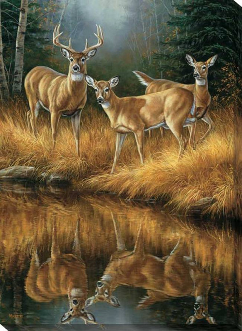 Whitetail Reflections Whitetail Deer Wrapped Canvas Art