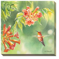 Hummingbird and Trumpet Vine Wrapped Canvas Art
