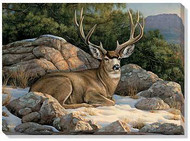 Resting Muley Wrapped Canvas Art