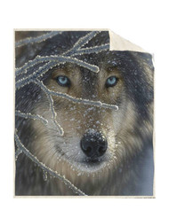 "Wolf Fire and Ice 50"" x 60"" Sherpa Throw"