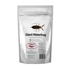 Giant Edible Water Scorpion 2 Pack