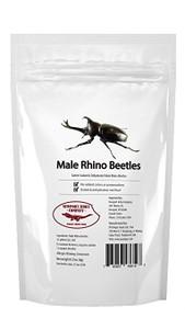 Edible Rhino Beetles