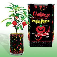 Challenge Scorpion Pepper