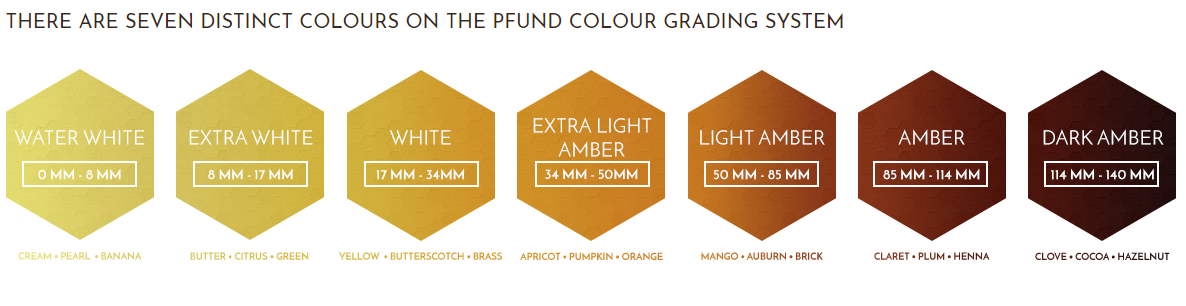 pfund-color-1.png