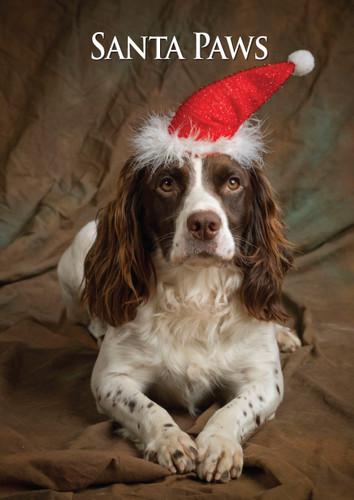 Springer Spaniel Santa Paws Christmas Card