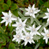 Edelweiss stem cells contains powerful antimicrobial and anti-inflammatory compounds that soothe skin and help prevent pore congestion and blemishes