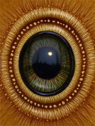 Eye 135