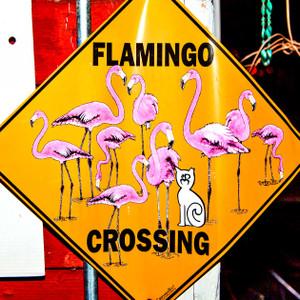 Flamingo Crossing // LA020
