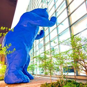 Blue Bear // DEN003