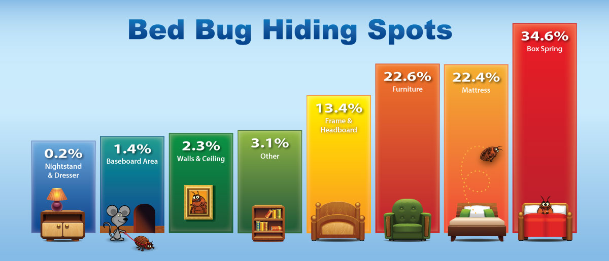 Where do bed bugs hide