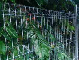 Galvanized Mesh Fence Panel 1200mm high x 2400mm wide.