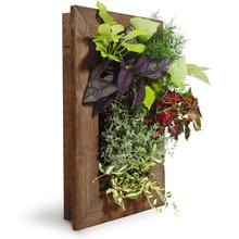 Grovert Wall Planter - Ghostwood Frame Kit