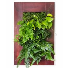 Grovert Wall Planter - Cherry Frame Kit