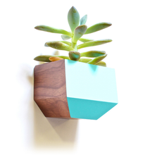 Sidecar Wall Planter- Walnut and Blue