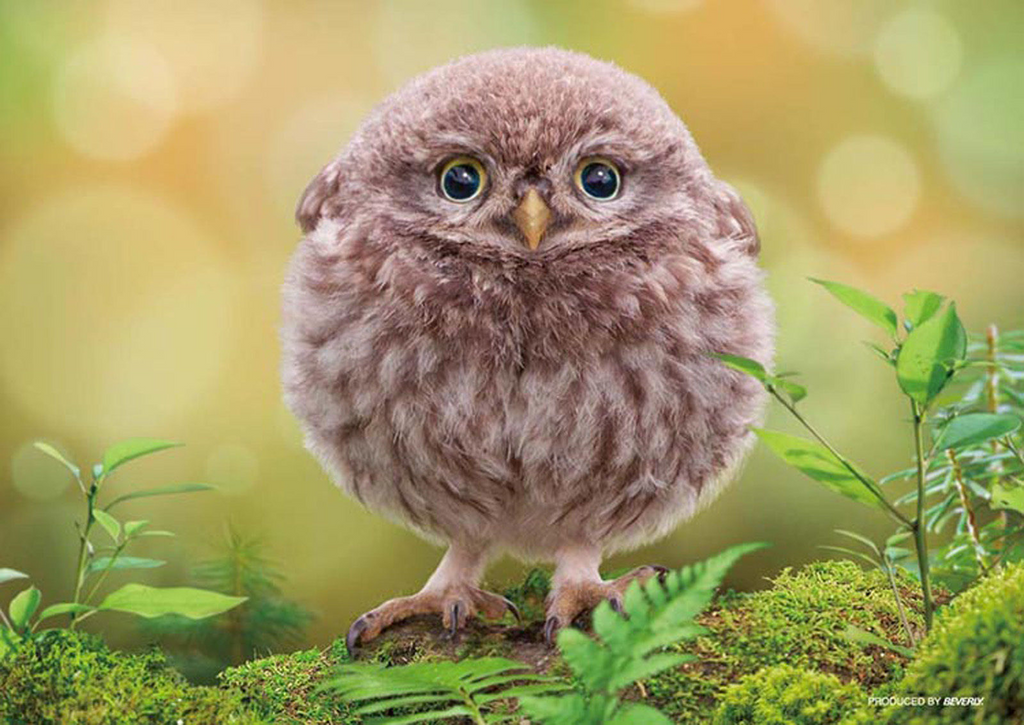 Beverly Jigsaw Puzzle P88-021 Pet Cute Round Owl (88 L-Pieces)