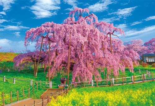 Beverly Jigsaw Puzzle 51-212 Japanese Scenery Miharu Takizakura (1000 Pieces)