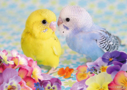 Beverly Jigsaw Puzzle P88-019 Pet Parakeet Chu Chu Chu (88 L-Pieces)