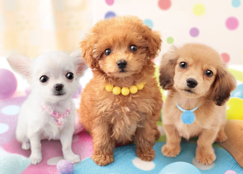 Epoch Jigsaw Puzzle 05-102 Pet Dog Chihuahua Toy Poodle Dachshund (500 Pieces)