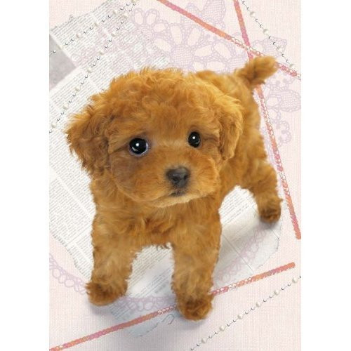 Epoch Jigsaw Puzzle 04-532 Dog (216 S-Pieces)