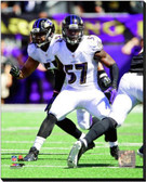Baltimore Ravens 2013 Team Introduction 20x24 Stretched Canvas