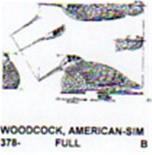 American woodcock carving pattern