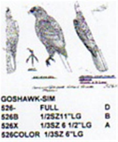 Goshawk Perching Carving Pattern