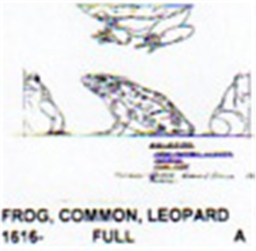 Common Frog Carving Plan