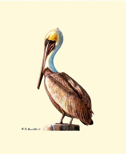 Coastal Pelican Bird Indoor Outdoor Wall Canvas Hanging