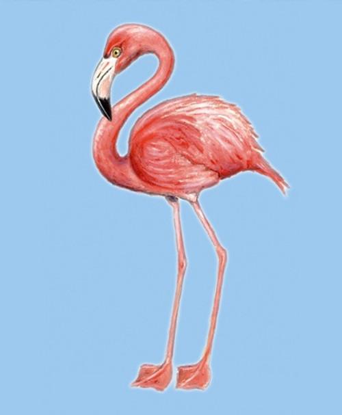 Bright Tropical Pink Flamingo Indoor Outdoor Wall Canvas Hanging