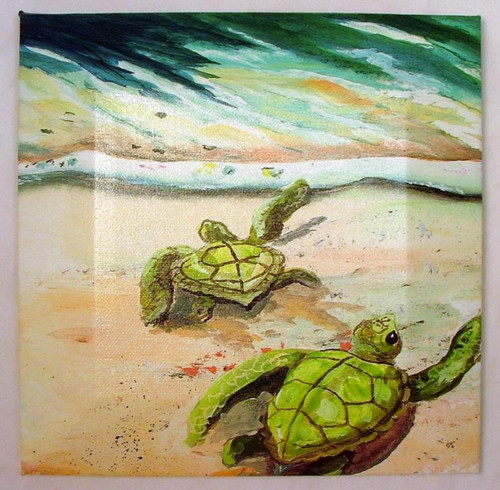 Ocean Green Newly Born Sea Turtles Giclee Canvas Beveled Wrap 9X9 Inches