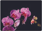 Lady Clare Tablemats Orchids