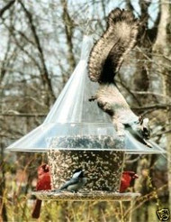 Arundale Mandarin Sky Cafe Squirrel Proof Bird Feeder Clear