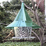 Arundale Mandarin Sky Cafe Squirrel Proof Bird Feeder - Green